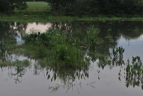 Revitalizace rybníka Pazderský v Radouňce – Co se zde nyní děje