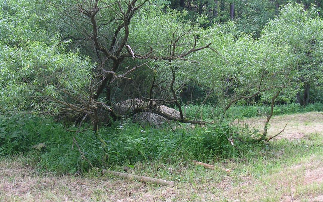 V Jindřišském údolí podpořeny životní podmínky plazů